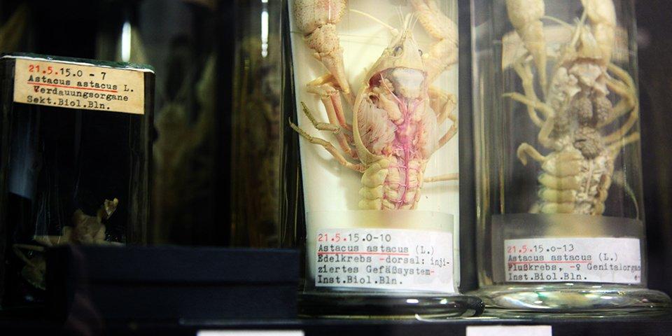 Zoologische Sammlung - Foto: Heike Zappe