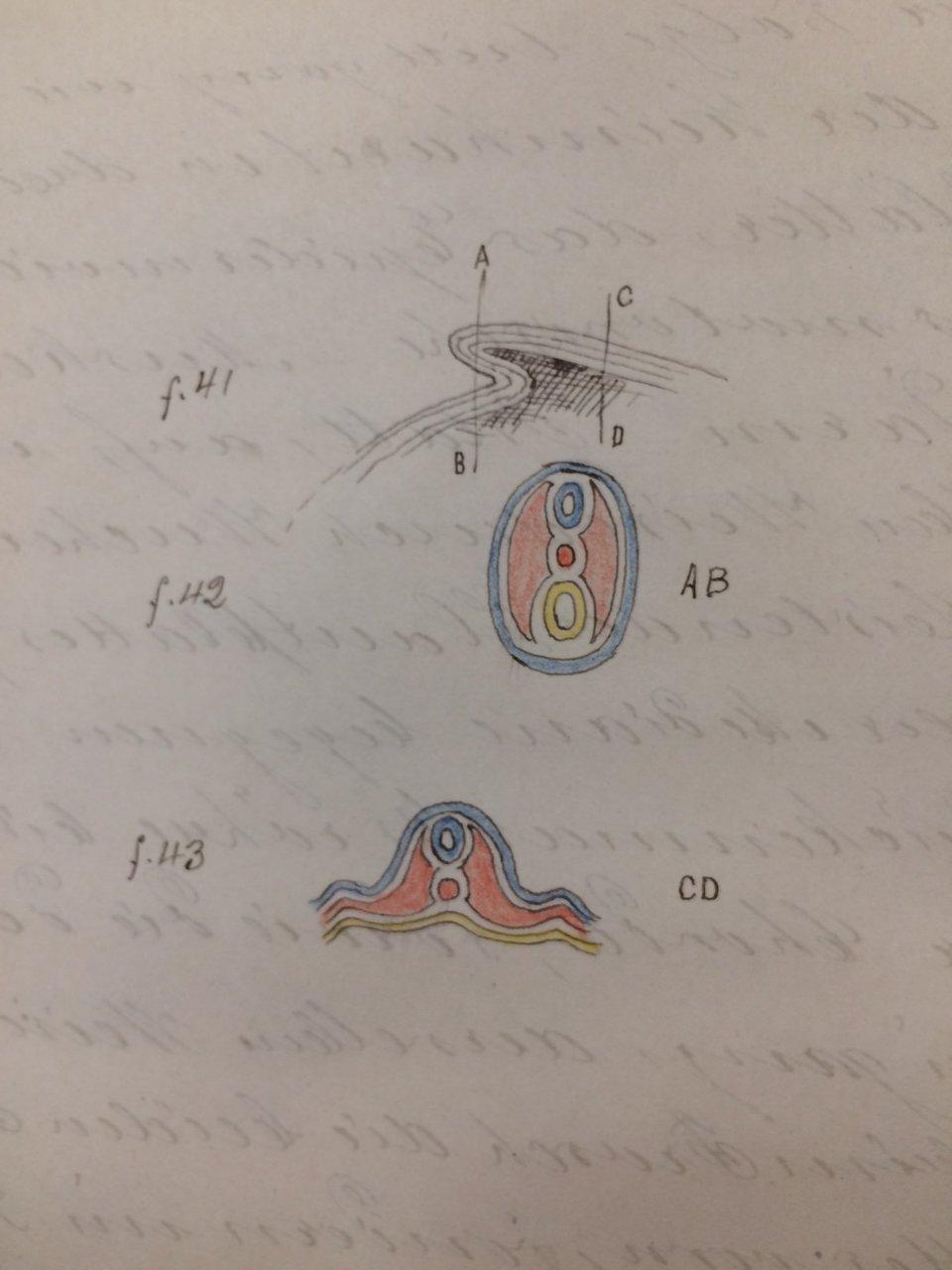 Abbildung von Bettina Bock von Wülfingen