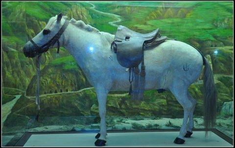 Pferd im Museum, 2011