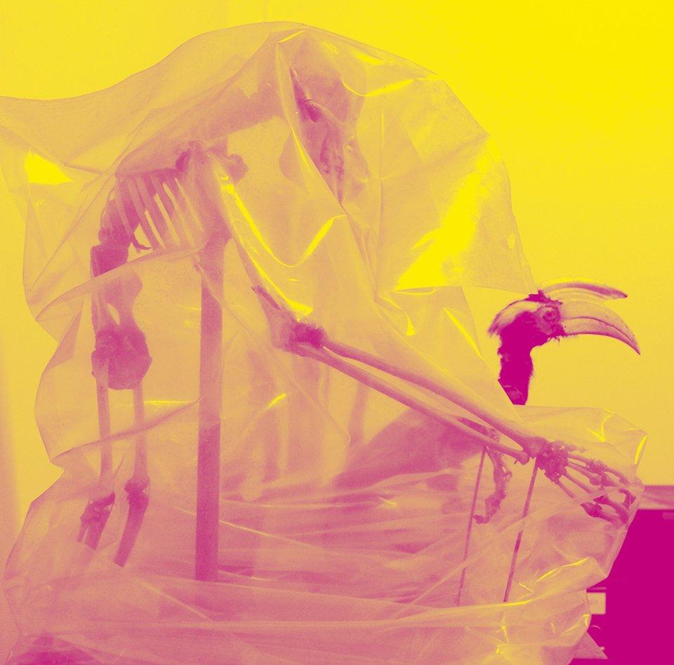 "Orang-Utan-Skelett und Nashornvogel, Sarawak Museum of Natural History. Foto: Etienne Turpin, 2014. Grafische Bearbeitung: Wolfgang Hückel für ""Reassembling the Natural""."